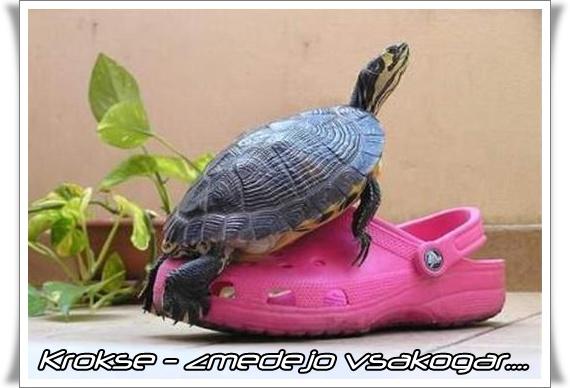 Crocs - zmedejo vsakogar (blog Don Marko M)