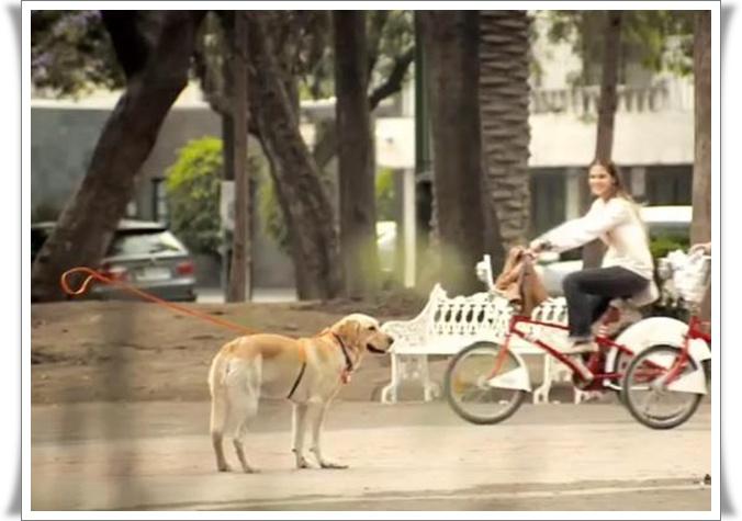 Pes na nevidnem povodcu (blog Don Marko M)