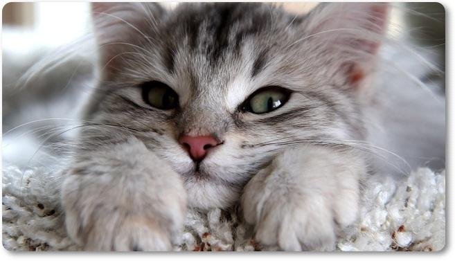 Mačka 1