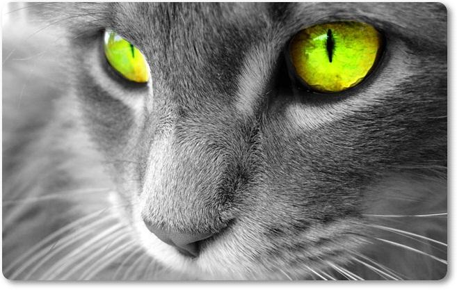 Mačka 4