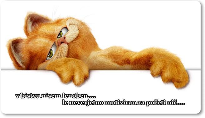 Mačka 6