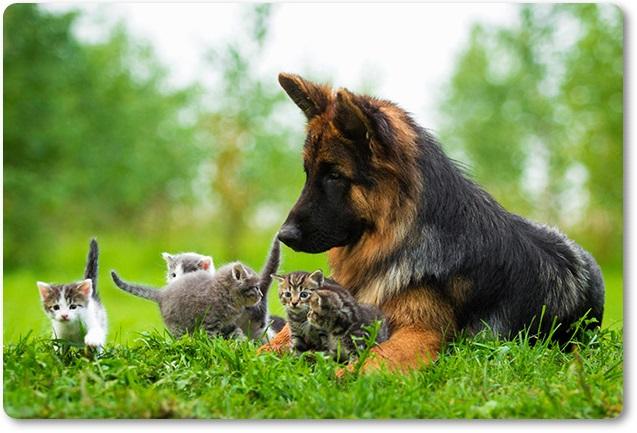 Mačka in pes (blog Don Marko M)