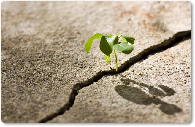 Sreča je (blog Don Marko M)