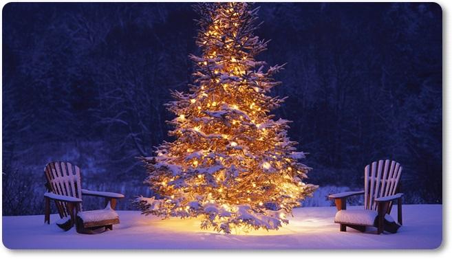 Drevo novo leto 2(blog Don Marko M)