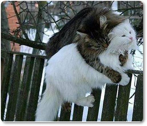 Mačke februarja (blog Don Marko M)